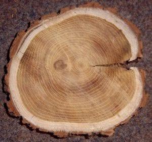 Fa keresztmetszet - rönkfa játék